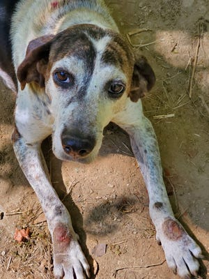 Dogs seized by Madison County Animal Services will be advertised for adoption in the coming weeks.