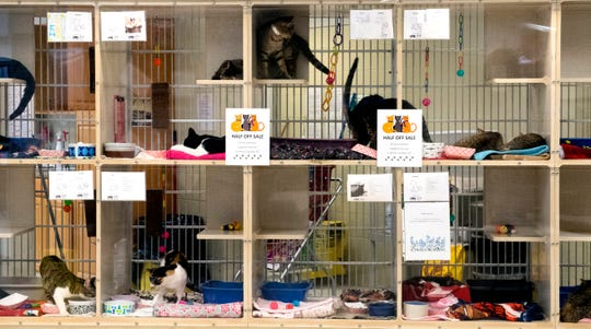 Cats wait to be adopted at the Vanderburhg Humane Society Friday afternoon, Oct. 18, 2019. The VHS says that many cats are facing euthanasia and are running a half-off sale through Oct. 31.
