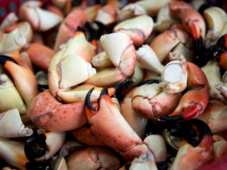 Stone crabs a popular treat, can be harvested by licensed recreational anglers