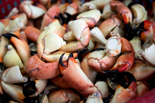 File: Stone crab claws sit in a cooler.