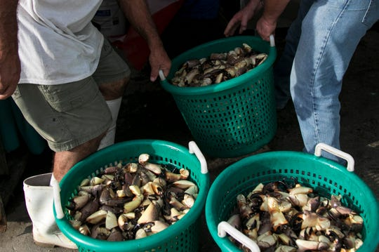Crabber John Falcone and Dallas Ryan lift a basket of stone crab claws at Island Crab Company on Thursday, October 17, 2019, on Pine Island.