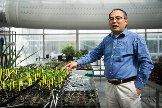 Xiaohan Yang speaks about genetic improvements of salt and drought tolerance after a showcase of new technologies Oak Ridge National Laboratory hopes to commercialize Thursday, Oct. 17, 2019.
