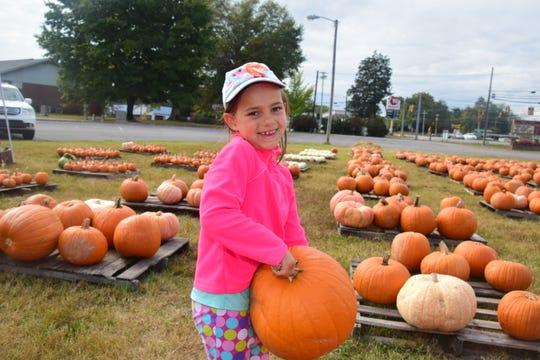 Eden Sharp, 6, picks a big pumpkin from the Pumpkin Patch at Beaver Ridge United Methodist Church.