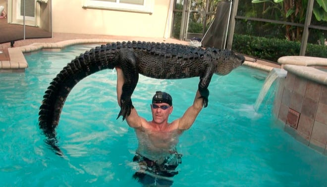 "In this Wednesday, Oct. 15, 2019, handout photo shows Paul Bedard raising a 9-foot alligator over his head at a home in Parkland. Bedard, a local trapper, removed the nuisance reptile that had jumped into a customer's pool. Bedard stars in the Animal Planet show ""Gator Boys."""