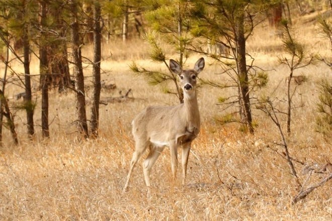 A recent study conducted by researchers at South Dakota State University found that neonicotinoid pesticides likely are causing birth defects in white-tailed deer. The study was the first of its kind to be conducted on large mammals.