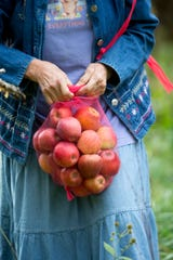 Betty Sue Lowe ties off a netted bag of fallen apples she gathered from under an orchard tree in Boones Mill, Va. on Oct. 10, 2019.  Apples, some of them mushy but others perfectly fine, litter the ground and emit a sweet smell. The orchard is quiet on this gray morning, save for the occasional gentle shake of a branch, followed by the thud of apples hitting the ground.