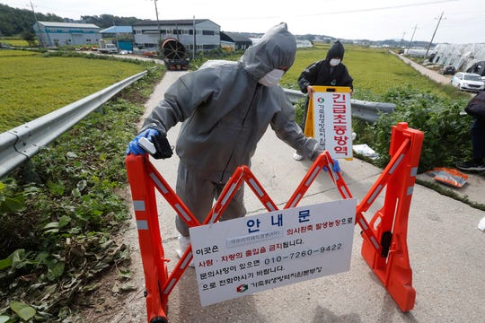 """FILE - In this Sept. 17, 2019, file photo, quarantine officials wearing protective gears place barricades as a precaution against African swine fever at a pig farm in Paju, South Korea. Amid swine fever scare that grips both Koreas, South Korea on Tuesday, Oct. 15, is deploying snipers, installing traps and flying drones along the rivals' tense border to kill wild boars that some experts say may have spread the animal disease from north to south. The notice reads: """"Under quarantine."""""""