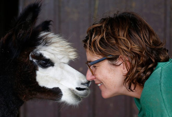 Lindsey Moore crouches down to talk to an alpaca at her farm in Plymouth, Ill., on Thursday, Sep. 12, 2019. Moore says she fell in love with alpacas' big eyes back in 2007 when she bought her first; she now owns 53 alpacas.
