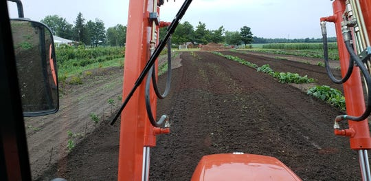 Field work being conducted on McCallum's pumpkin path in July.