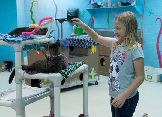 Alabama Mehringer, 9, plays with Betty Boop at the Vanderburgh Humane Society Friday afternoon, Oct. 18, 2019. The VHS says that many cats are facing euthanasia and are running a half-off sale through Oct. 31.