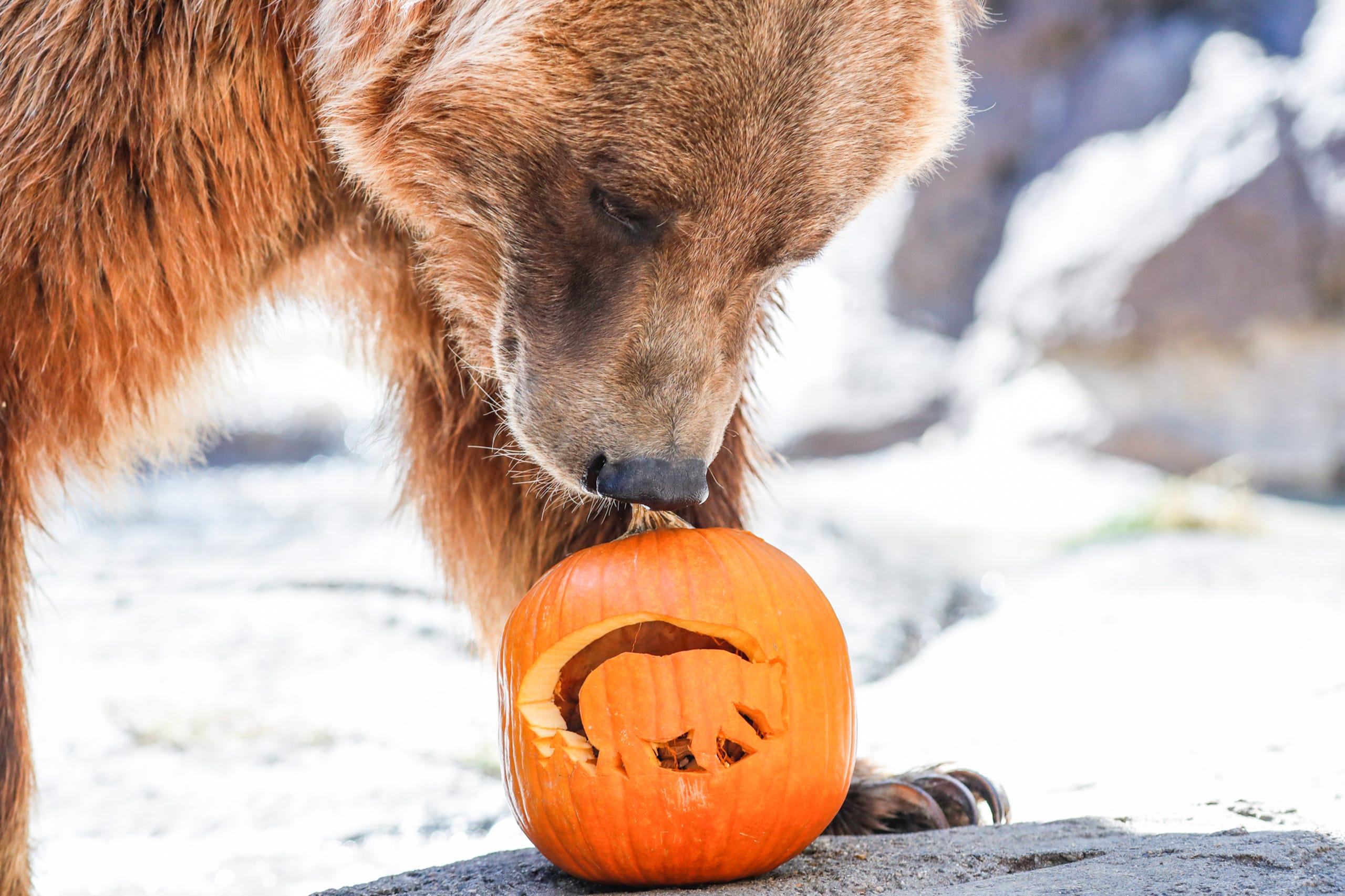 Christmas At The Zoo Indianapolis 2019.Zoo Boo 2019 At The Indianapolis Zoo Proves Unbearably Cute