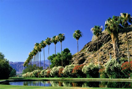 Frank Bogert chose this image of palm trees at the O'Donnell Golf Course for the cover of his classic book on Palm Springs history.