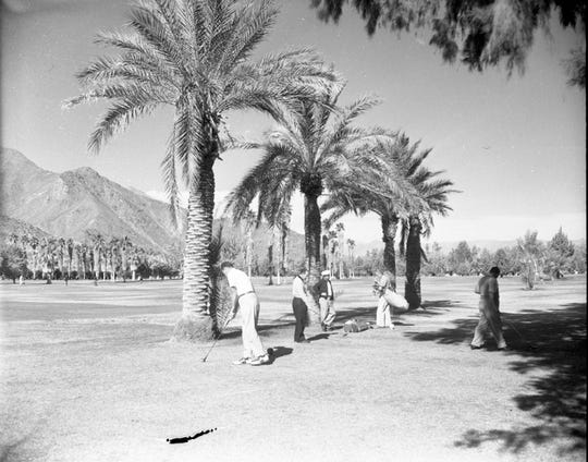 Date palms were added as ornament to the landscape. Pictured here in 1951. O'Donnell Golf Club