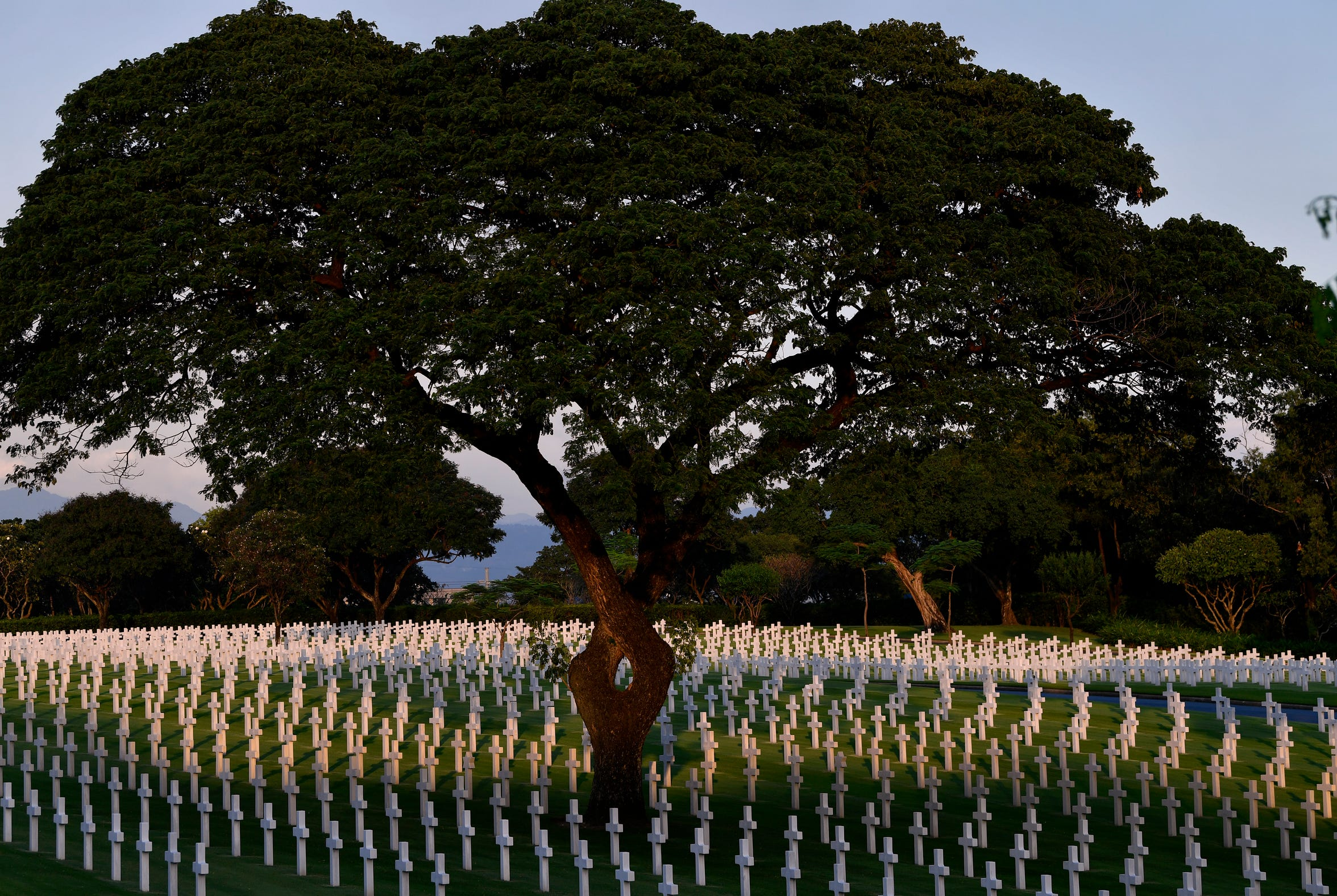 An acacia tree, its split trunk twining back toward itself, stands over grave markers at the Manila American Cemetery.