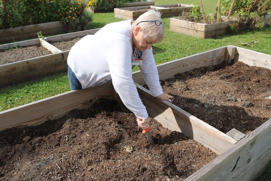 Master gardener Viola Purdy, of Fremont, demonstrates how garlic should be planted in rows about eight inches apart.