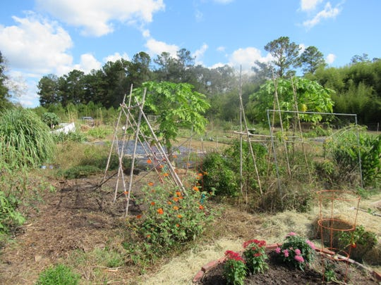 Another is a partial view inside the Havana Community Garden