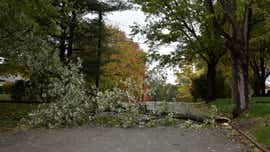 High winds down trees, cause outages in BC