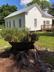 An old cane syrup boiling pot now holds bromeliads at the  historic Alva Library Museum.
