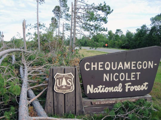 Trees sheared off at heights of 10 to 15 feet are a common sight in the Chequamegon-Nicolet National Forest following a severe windstorm July 19 and a smaller storm the next morning. The damage is noticeable to travelers on Route 32 between the towns of Riverview and Lakewood.