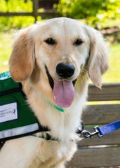 IMPACT 100 grant paves way for therapy dog Sherlock at Studer Family Children's Hospital.