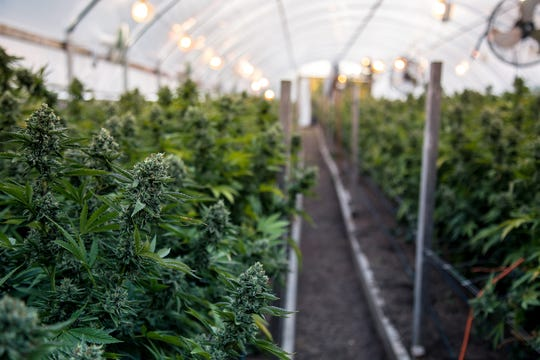 If you're buying legal medical cannabis in Arizona, it's been grown and produced in the state in highly regulated operations.