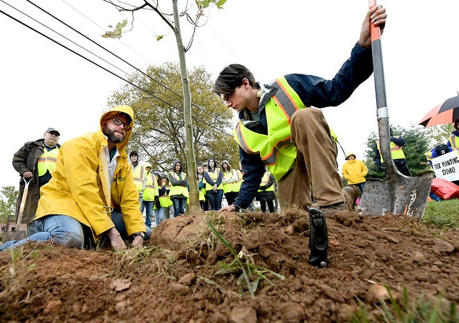 Christian Fitzpatrick, Bartlett Tree Experts local manager, left, and employee Paul Sepich, demonstrate to other volunteers proper tree planting techniques during the Trees for the Trail project Sunday, October 20, 2019. Volunteers planted 63 trees Sunday in an effort to replenish the original 1920s planting which was a memorial to WWI veterans. A dedication ceremony for the project will be Nov. 10 at Susquehannock High School.  Bill Kalina photo