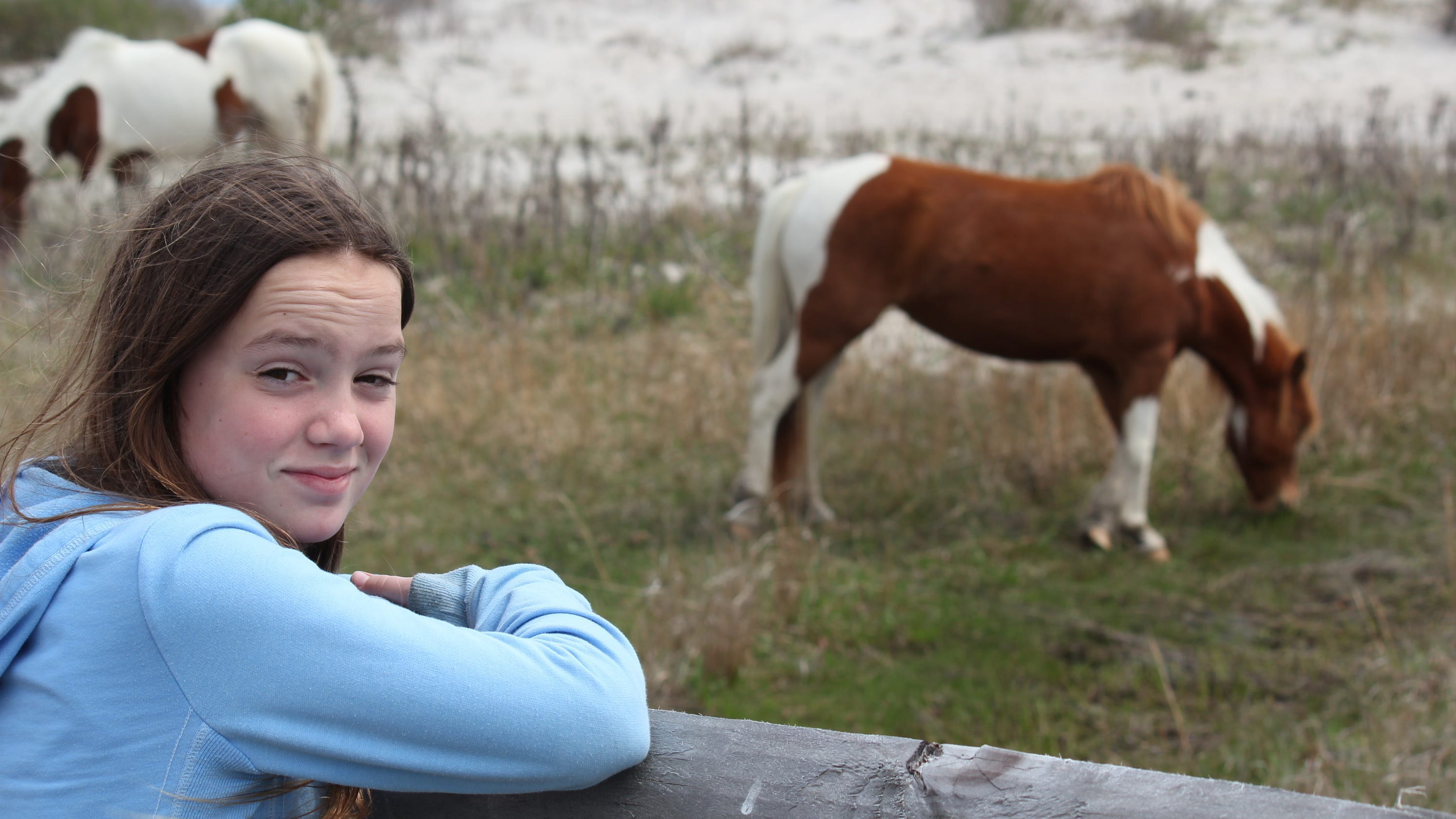 The horse people': Md  teen adopts entire herd of Assateague