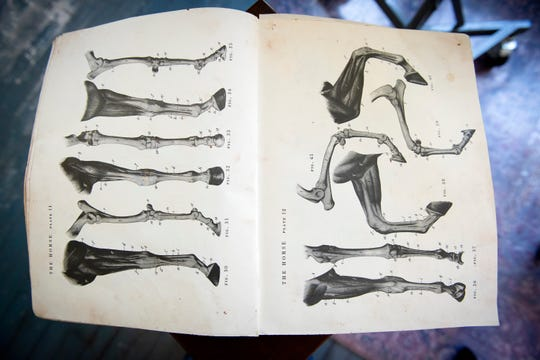 Artist Ann Malphrus uses an anatomy book to get the correct shape and contour of a horse's leg.