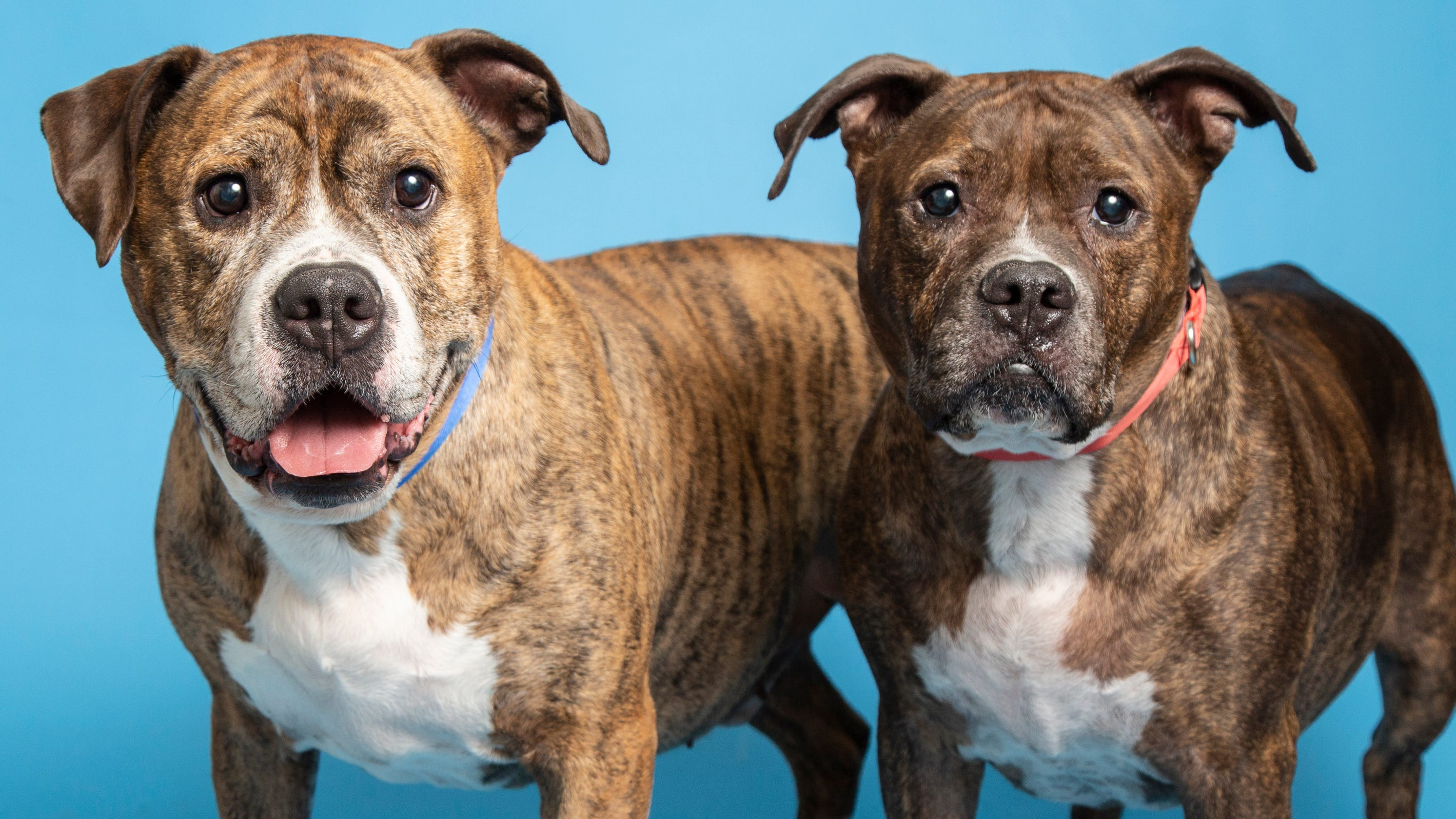 Best buds for life and more up for adoption in Valley shelters