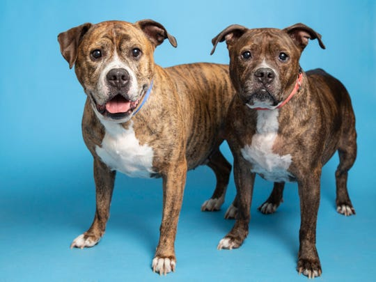 Mamas and Blaze are available for adoption on Oct. 27 at noon at 1521 W. Dobbins Road in Phoenix. For more information, call 602-997-7585 and ask for animal numbers 618072 and 618073.