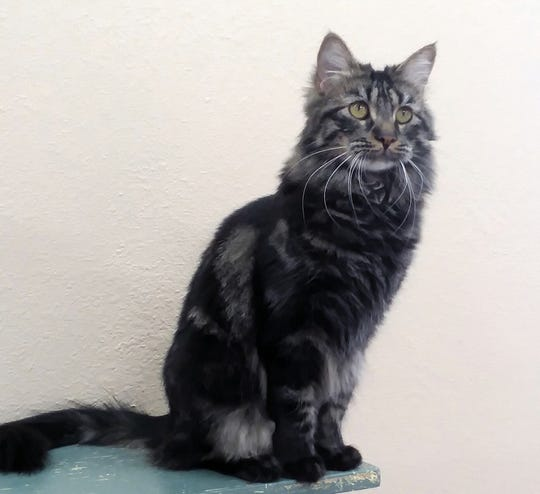 Letta is available for adoption at 10807 N. 96th Ave. in Peoria. For more information, call 623-773-2246 after 10 a.m.