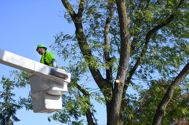 Rick Klemisch with the Parks and Recreation Department trims trees as a part of Project T.R.I.M. pilot on Tuesday, Oct. 22, 2019 near East 15th and 16th streets. The pilot program is testing how much it costs to maintain curbside trees without billing property owners.
