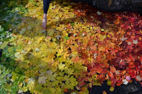 A student from Northern Michigan University puts down leaves as part of an art installation at the Black Rocks in Marquette.