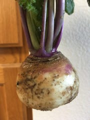 Judy grew this turnip, but decided to eat it instead of carve it.