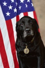 Retired Cedarburg police dog Jake died on Oct. 22 after a battle with lymphoma. He was 12 1/2 years old.