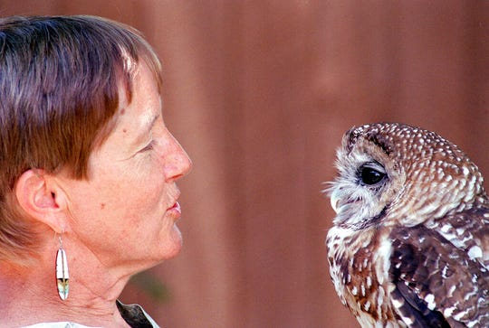 "In this July 11, 2002, file photo, Dr. Kathleen Ramsay gets the attention of ""Manchado,"" a Mexican Spotted Owl at the Wildlife Center near Española, N.M. The cutting of Christmas trees across several national forests in the Southwest will be allowed under an order issued by a U.S. district judge in the fight over a threatened owl. That includes a tree from the Carson National Forest that will be felled and displayed outside the U.S. Capitol. The tree-cutting along with prescribed burns and other projects were put on hold following an earlier ruling in a case that alleged the U.S. Forest Service failed to consider the effects of thinning and logging on the Mexican spotted owl."