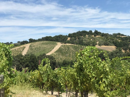 Paso Robles is filled with vineyards and wineries.
