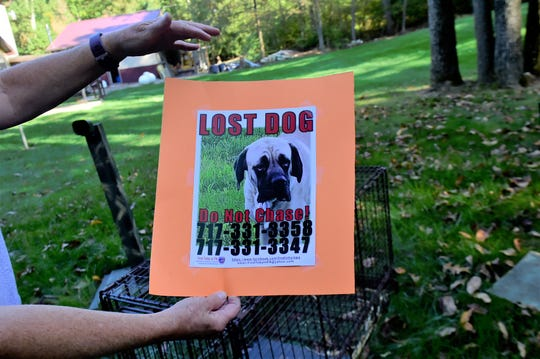 Violet, a mastiff, was lost for nearly two months until sightings near Waynesboro  made the team leap into action. Kim Reed Bard said flyers are an essential part of bringing pets home