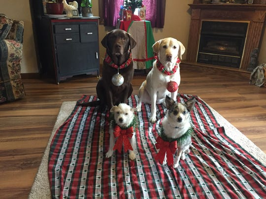 Reed Bard has three dogs, all rescuesRex, Delilah and Moxy - another, Guinevere (front left), recently passed in June.
