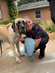 Hollie Taylor is happy to have her dog Violet home safe after two-months of searching. Although Violet lost over 30 pounds, Taylor said she's healthy and settling back in with her canine brothers and sisters.