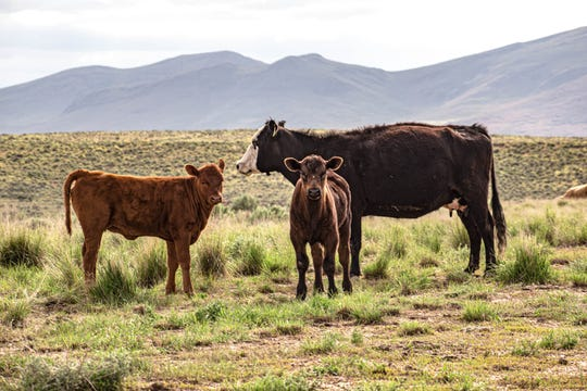 The 25 Ranch includes longtime grazing permits and an annual carrying capacity of 6,500 cows.