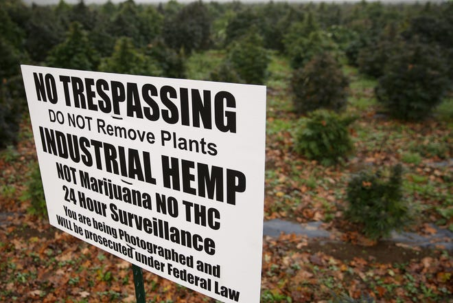 A sign warning people of surveillance and that the hemp planted is not marijuana at L & J Valley Farms near Gervais, Oregon on Oct. 23, 2019.