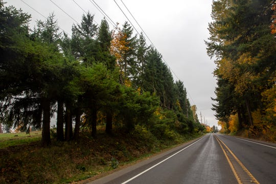 A line of trees around Carey Vanderbeck's property grows, but will be removed during a county construction project in northeast Salem, on October 23, 2019. Marion County's plan to replace a bridge on Silverton Road will require the removal of nearby trees, and Vanderbeck is upset they won't be replaced after construction.