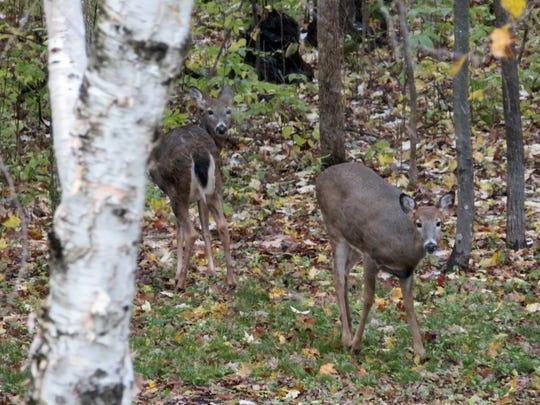 The upcoming deer season is a cherished event for many Minnesotans.