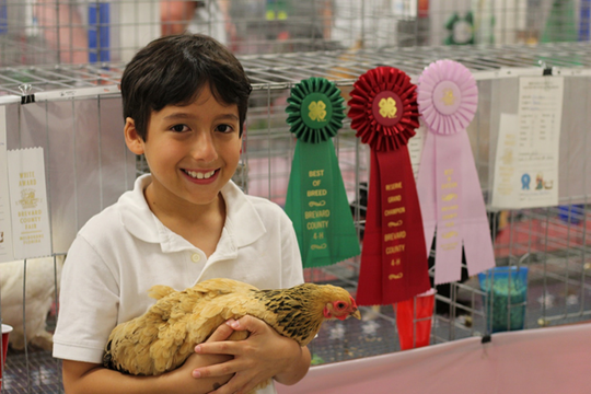 Youth and adults can enter a variety of exhibits, from livestock to sculpture, at the 78th Annual North Florida Fair.