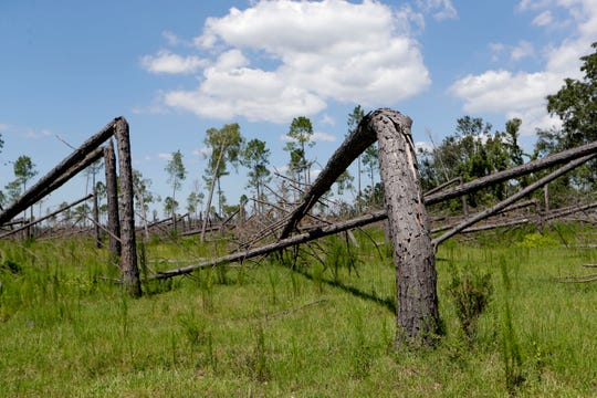 Trees snapped like toothpicks by Hurricane Michael in Oct. 2018 remain lying in fields along the side of the highway in Altha, Fla., a year after the storm struck the Panhandle.