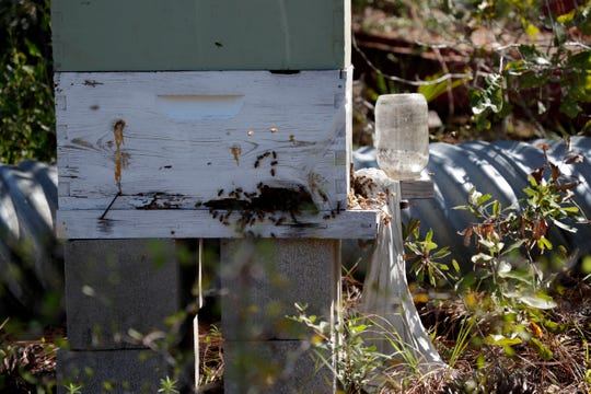 Bees fly in and out of a bee box on Corbett Rich's property Friday, Aug. 30, 2019. Rich is a beekeeper and Altha, Fla. resident who experienced severe damage to his home and belongings when Hurricane Michael hit the Panhandle in Oct. 2018.