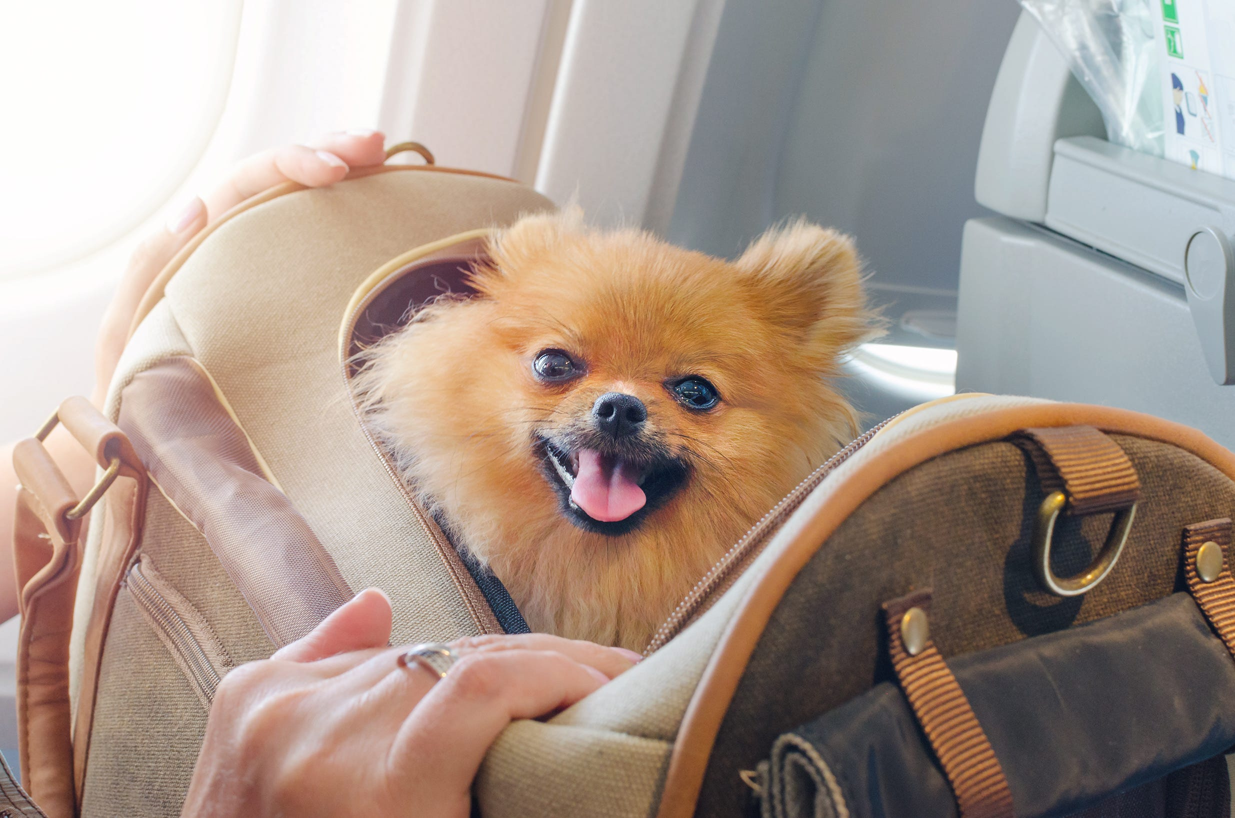 Should You Fly With Your Pet Ask Yourself These Questions First