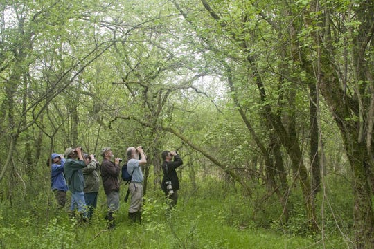 """A group of birders all look in unison toward the tree tops in Hawthorn Orchard in Ithaca in 2017, one of the Cayuga Bird Club's 76 hot spots in the book """"Birding the Cayuga Lake Basin."""""""