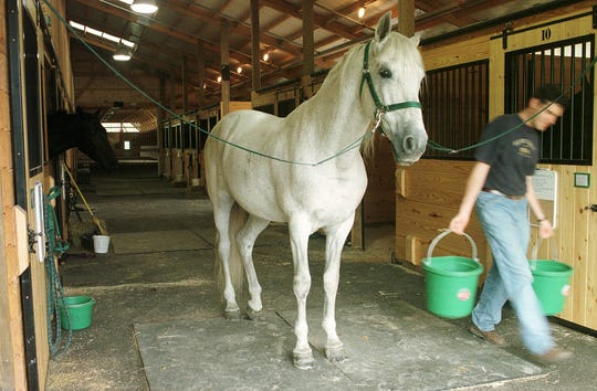 Horses will be dressed up for trick or treating at the University of Vermont barn on Spear Street in Burlington.